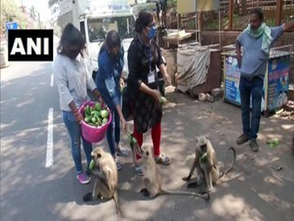 The volunteers of People for Animals feed monkeys in Khandagiri, Bhubaneswar on Friday. Photo/ANI