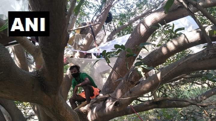 People in West Bengal's Balarampur quarantined themselves on a tree (Photo/ANI)