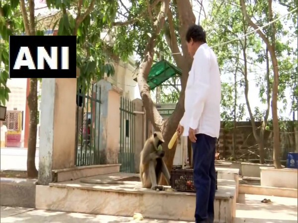 BJD MP and Founder of KISS Foundation Achyuta Samanta feeding a monkey in Bhubaneswar on Sunday.