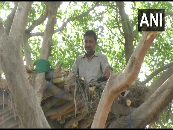 Man builds tree house in Hapur District, UP