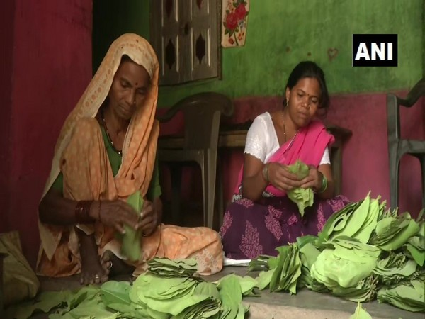 44 village panchayats auction tendu leaves to bring profit to pluckers in Maharashtra.