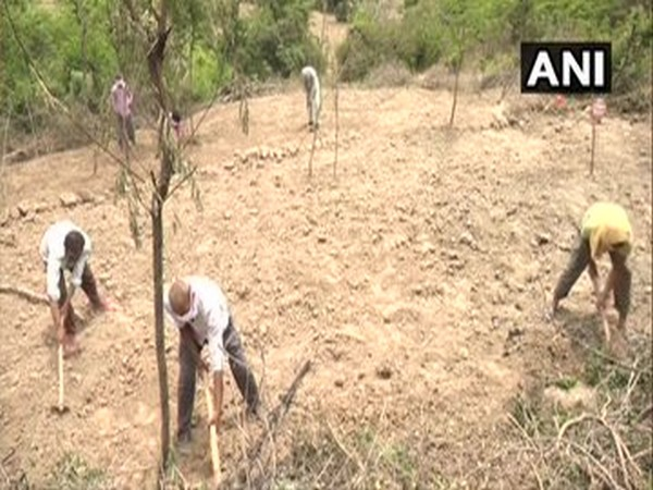 People working on land under MGNREGA in Jammu and Kashmir's Udhampur (Photo/ANI)