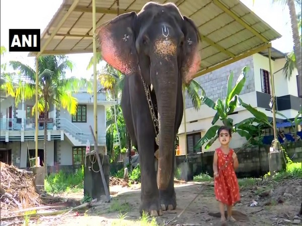 A visual of two-year-old girl with elephant in Thiruvanathapuram, Kerala. (Photo/ANI)