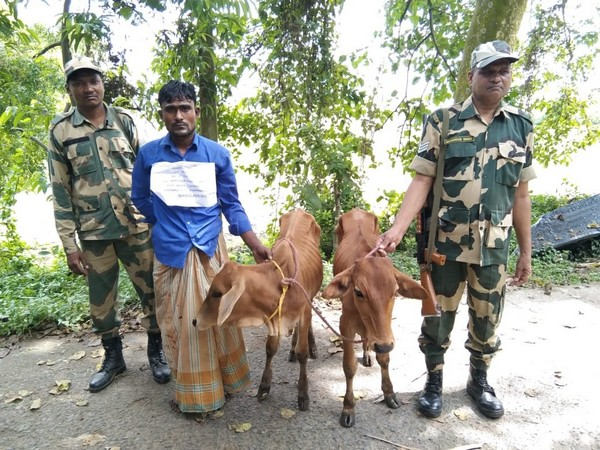 One of the Bangladeshi cattle smugglers apprehended by BSF (Photo/ANI)