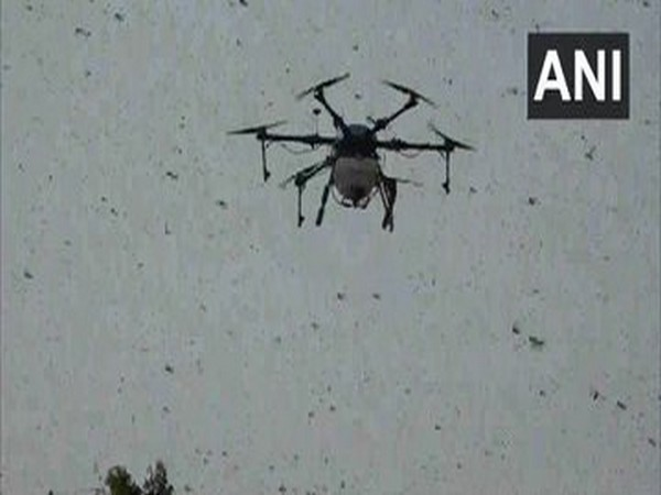 Drone being used to spray insecticides to kill locusts in Agra. (Photo/ANI)