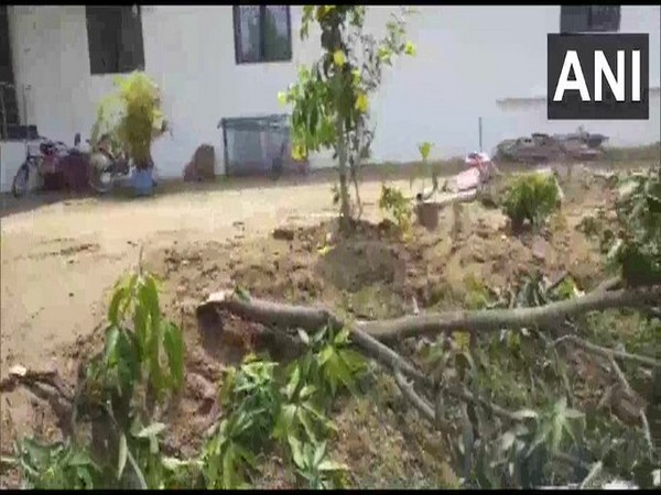 An elephant damaged trees and a solar panel at a BJP MP's residence in Jashpur on Tuesday.