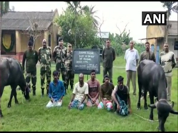 A team of the 141 battalion BSF arrested 5 Bangladeshi nationals for trying to smuggle cattle to Bangladesh (Photo/ANI)