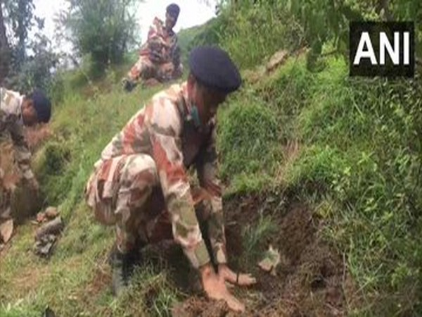 ITBP personnel planting saplings in Shimla district on Sunday. (Photo/ANI)
