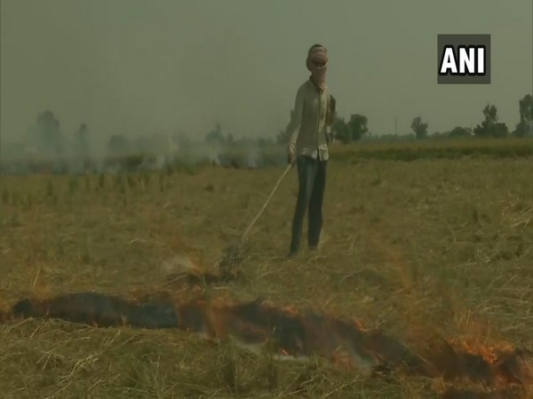Farmers in Amritsar burn stubble. (Photo/ANI)