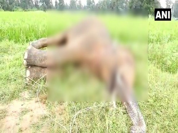 An elephant was electrocuted to death in Chhattisgarh. (Photo/ANI)
