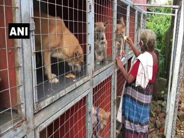 Rukminiamma feeds and houses the dogs despite her meager income. (Photo/ANI)