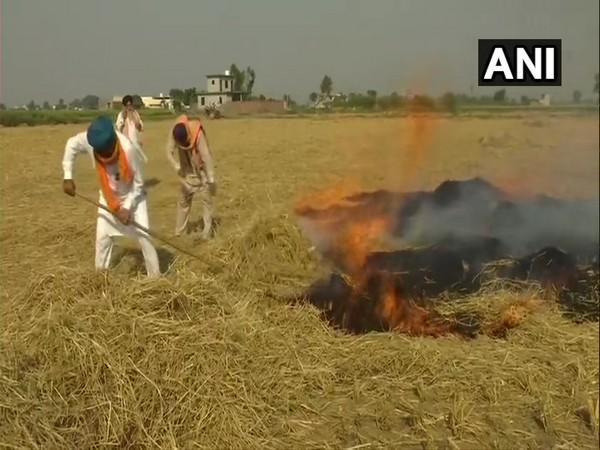 Farmers burn stubble in Amritsar's Devidaspura. (Photo/ANI)