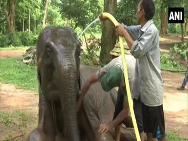 A visual from the Assam Zoo (Photo/ANI)