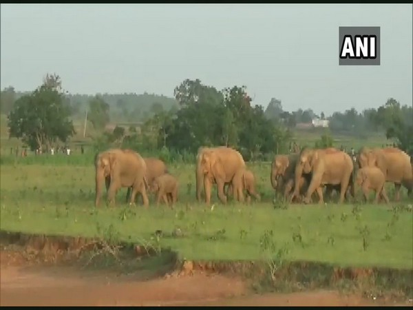 A group of elephants in a village (File photo)