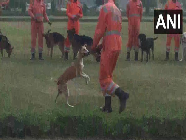 NDRF dog trainers demonstrating ability of indigenous dogs. (Photo/ANI)