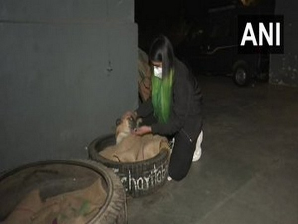 Vibha Tomar with a stray dog in its tyre bed. (Photo/ANI)