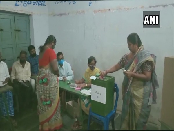 People are seen casting votes for gram panchayat polls in Andhra Pradesh. (Photo/ANI)