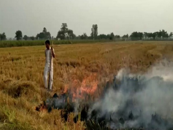 The Agriculture Department has identified 600 incidents of stubble burning in Fatehabad.