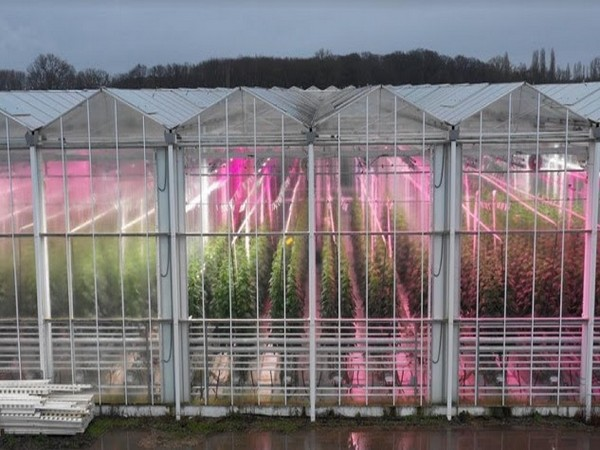 Fluence launches new modules of LED VYPR top light series with innovated PhysioSpec(tm) Spectra for greenhouse cultivators