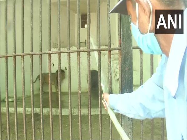 Water being sprayed in cages for cooling effect. (Photo/ANI)