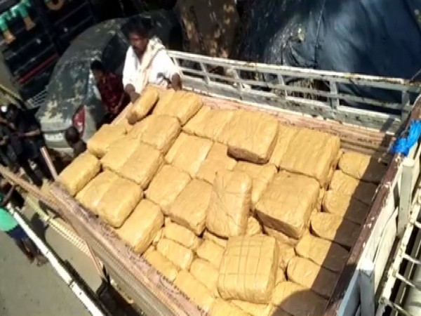 The police seized 500 kg of cannabis in Narsipatnam on Monday.
