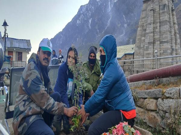 Himalayan Balsam sapling planted at Kedarnath temple under Green India Chalenge (Photo/ANI)