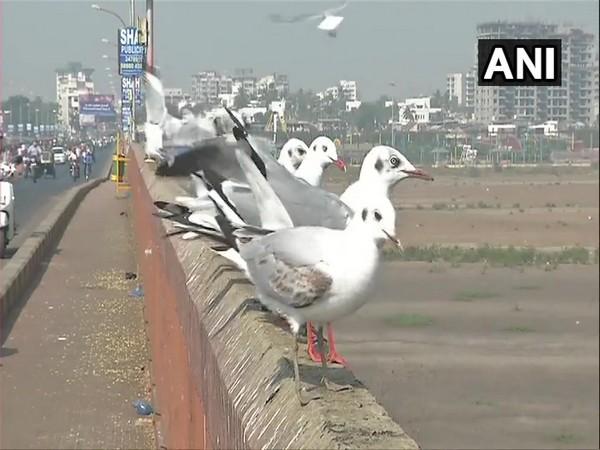 Migratory birds flock to the city of Surat (Photo ANI)