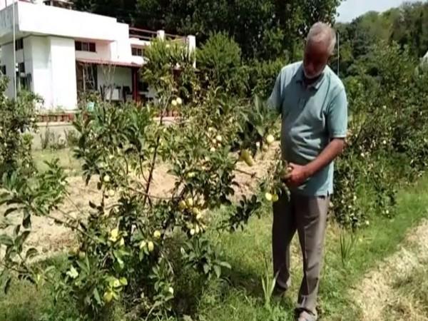 Gurinder Singh working in his farm