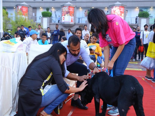 Dog adoption drive 'Cause 4 The Paws'