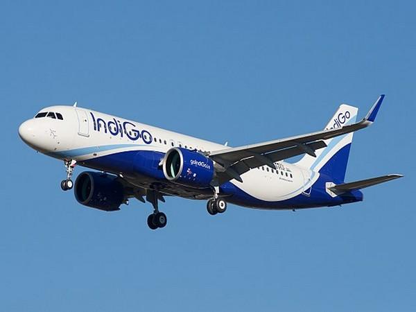IndiGo has a fleet of 217 aircraft