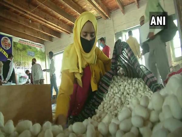 A cocoon farmer in Srinagar today. (Photo/ANI)