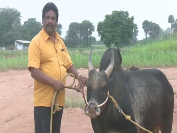 AzhagaraSamy with his bull in Madurai on Tuesday (File Photo/ANI)