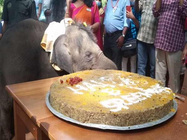 Sreekutty, one-year-old elephant calf celebrates her first birthday in Kerala