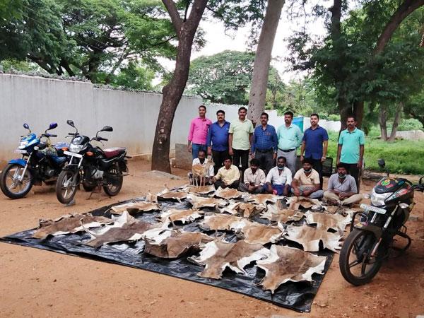 Mangaluru Forest Trafficking Squad officials seized 20 skins and 2 heads of blackbucks in Koppala district of Karnataka.