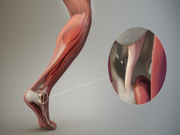 Tendons are the connective tissue that tethers our muscles to our bones.
