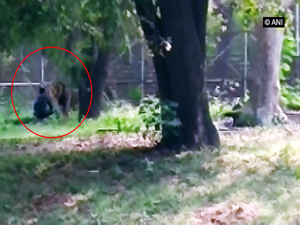 A 28-year-old man climbed into a lion enclosure in the Delhi Zoo  [Photo/ANI]