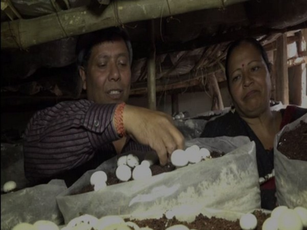 Mushroom cultivation is increasingly becoming popular among locals of the region.