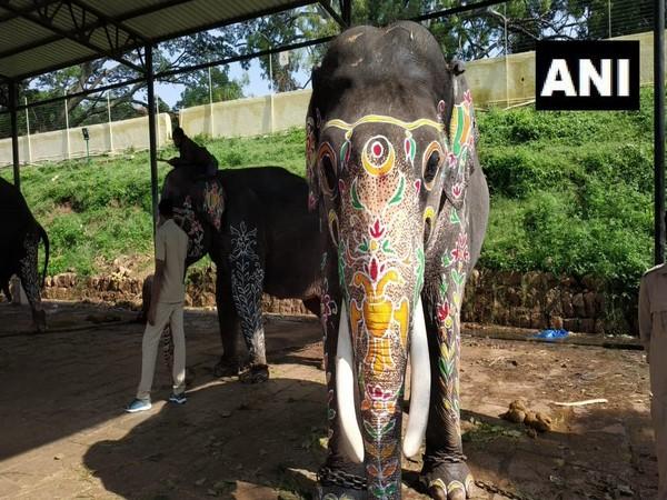 Elephants being decorated for 'Jamboo Savari' procession in Mysuru, Karnataka on Tuesday. (Photo/ANI)