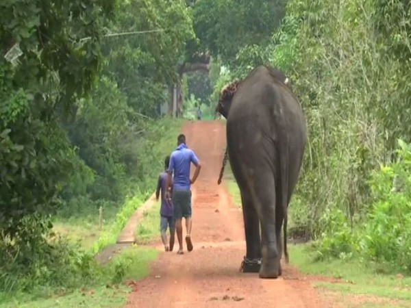 Chandaka-Dampara Wildlife Sanctuary will reopen from Oct 2 in Odisha. Photo/ANI