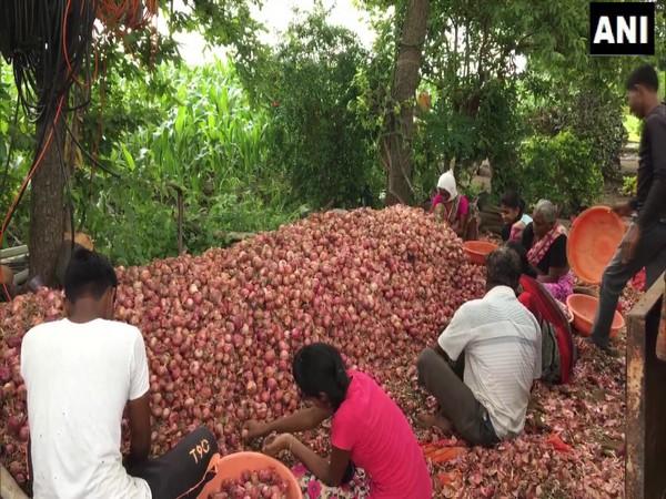 Onion mandi traders in Nashik's Lasalgaon Mandi (Photo/ANI)