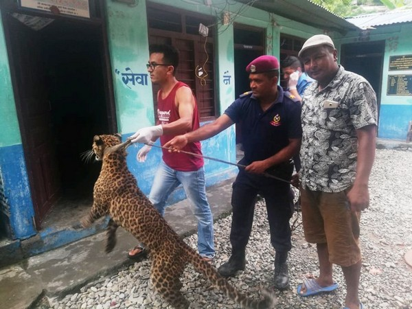People posing for photo with the captured leopard. Photo/ANI
