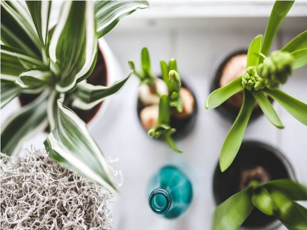 22 per cent of millennial' are intimidated because they've accidentally killed one plant in the past.