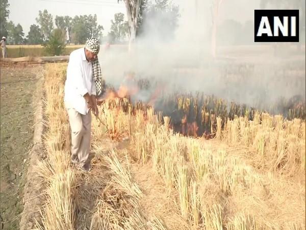 Farmers continue to burn stubble near Jalandhar's Phillaur area (Photo ANI)