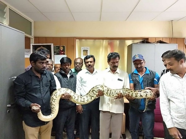 BBMP wildlife rescue team members with the rescued python on Monday. Photo/ANI