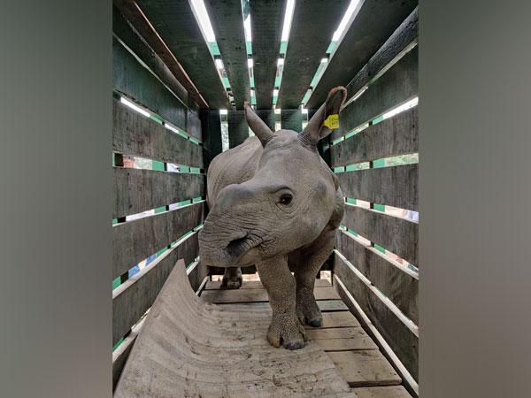 Visual of one of the rhinos (Photo/ANI)