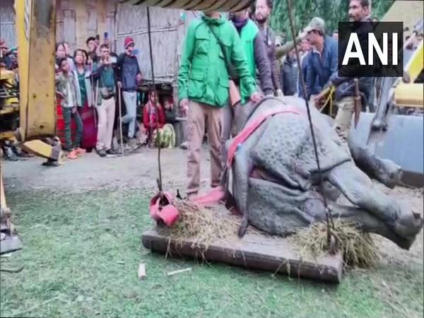 Rescued rhino