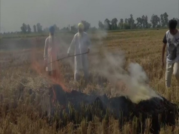 Despite warnings, Punjab farmers burn farm stubble in Amritsar [Photo/ANI]