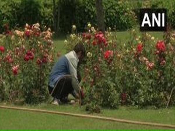 Restoration work begun at Mughal Garden in Srinagar. Photo/ANI