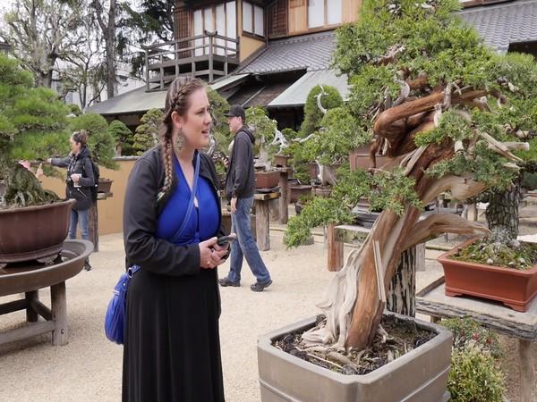 A tourist admiring the beauty of Bonsai trees