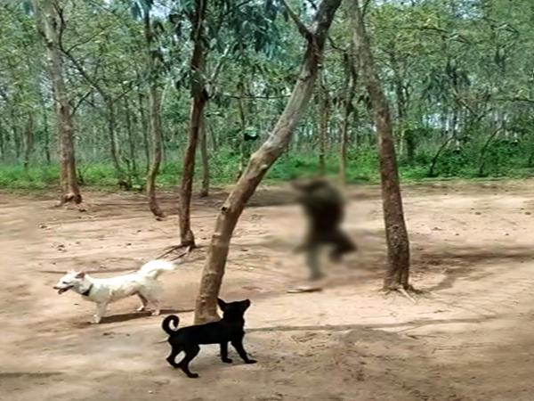 Monkey beaten, hung on tree by villager after it enters house in search of food. (Photo/ANI)